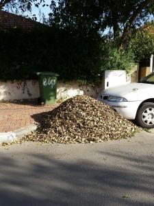 ערימת עלים ברחוב. עובדי העירייה יכולים להקל עלינו מאוד את מלאכת האיסוף...