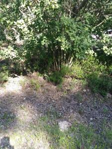 ביער, עלים שנשרו וחומר אורגני נשארים מונחים על האדמה, מחפים ומגנים עליה