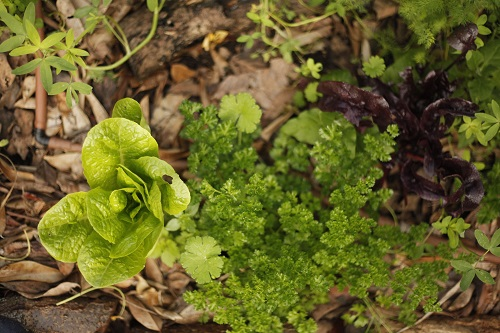 שפע הטבע - מגוון צמחים.jpg2