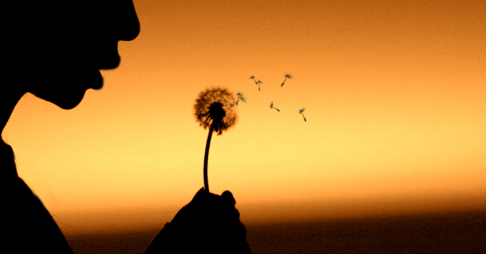זרעים עפים ברוח