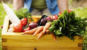 גידול ירקות 2
